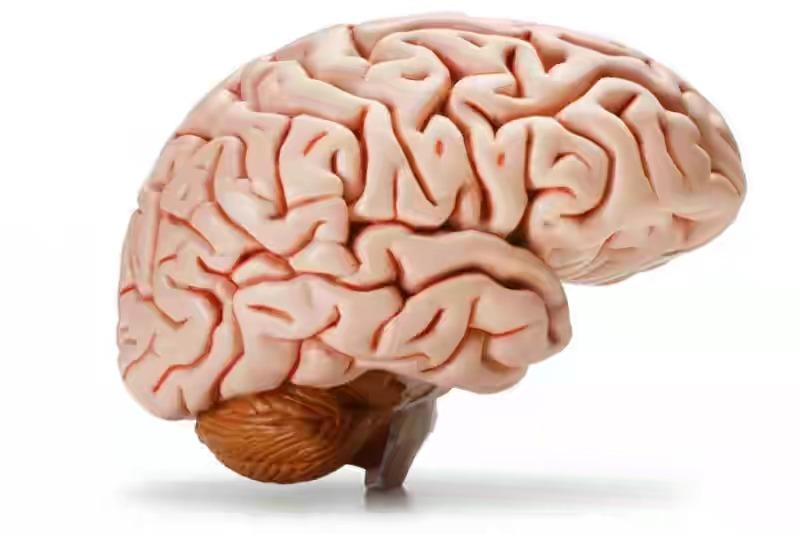 العقل البشري