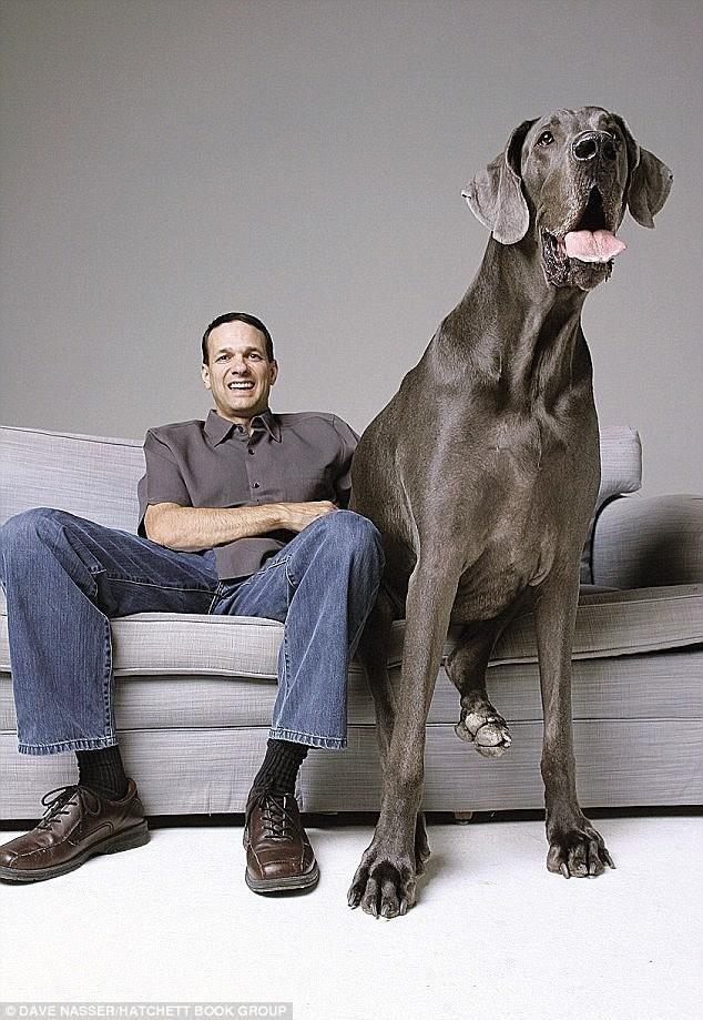 الكلب جورج