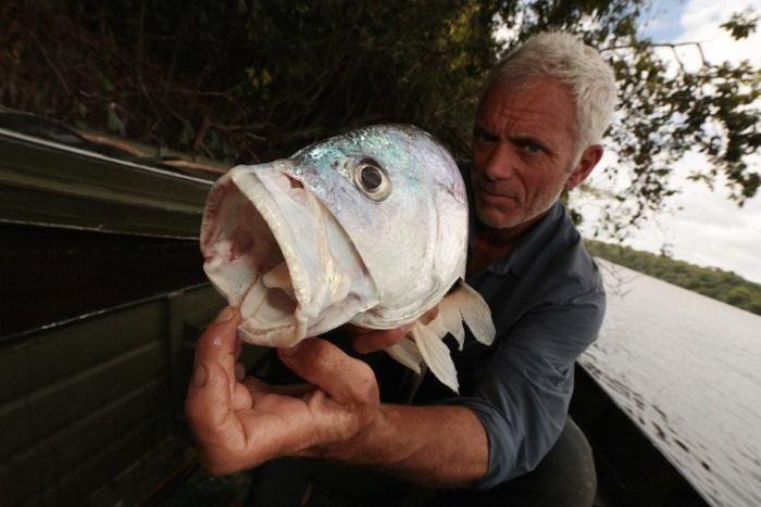 سمكة طبل المياه العذبة