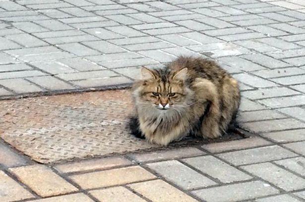 قطة تنتظر صاحبها عام كامل في نفس المكان