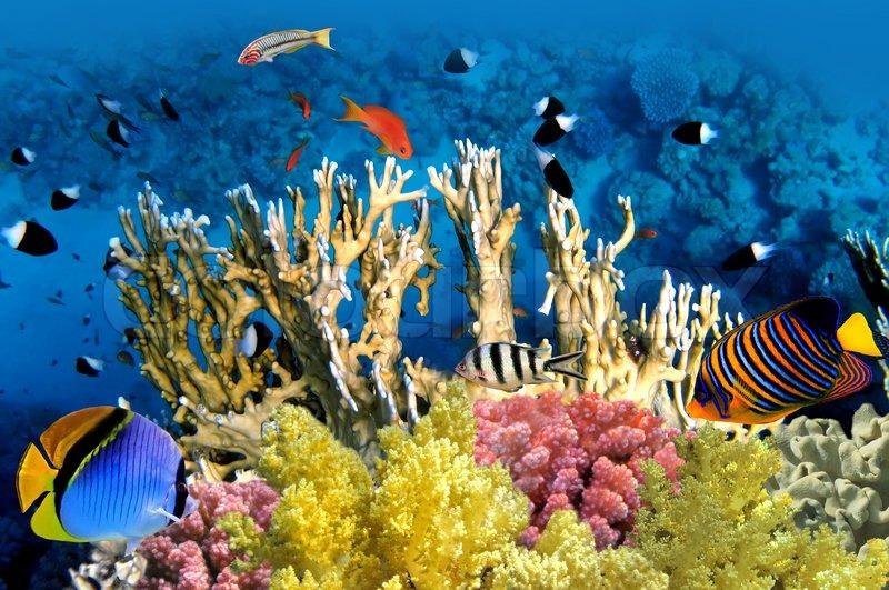 الشعاب المرجانية