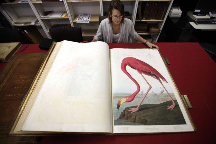 كتاب طيور أمريكا