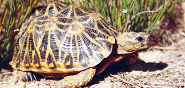 السلاحف أقدم الحيوانات على الأرض