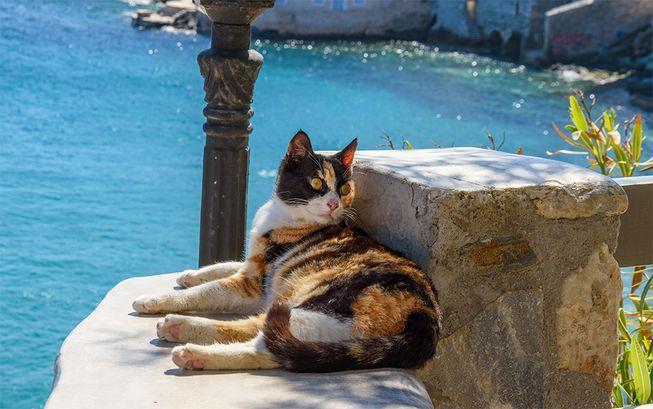 منظمة القطط في اليونان