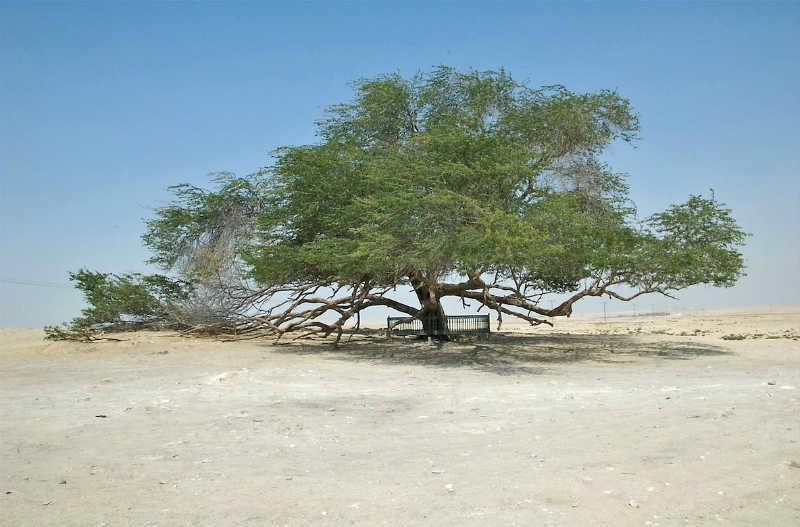 شجرة الحياة المرنة