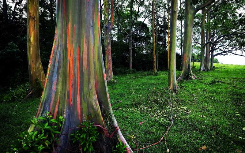 افضل اشجار العالم الملونة