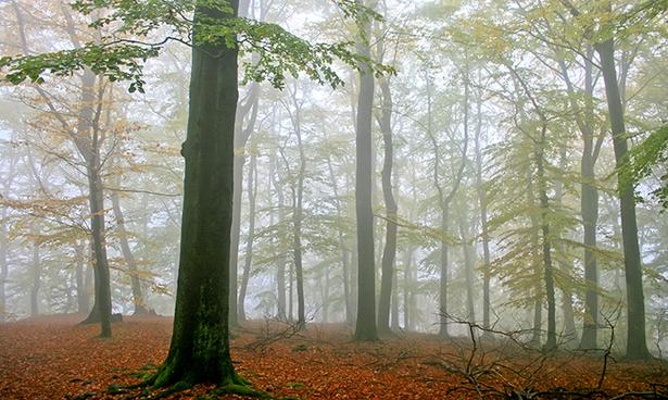 اشجار طبيعية